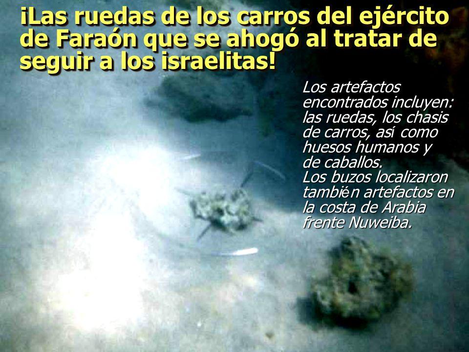 ¡Las ruedas de los carros del ejército de Faraón que se ahogó al tratar de seguir a los israelitas!