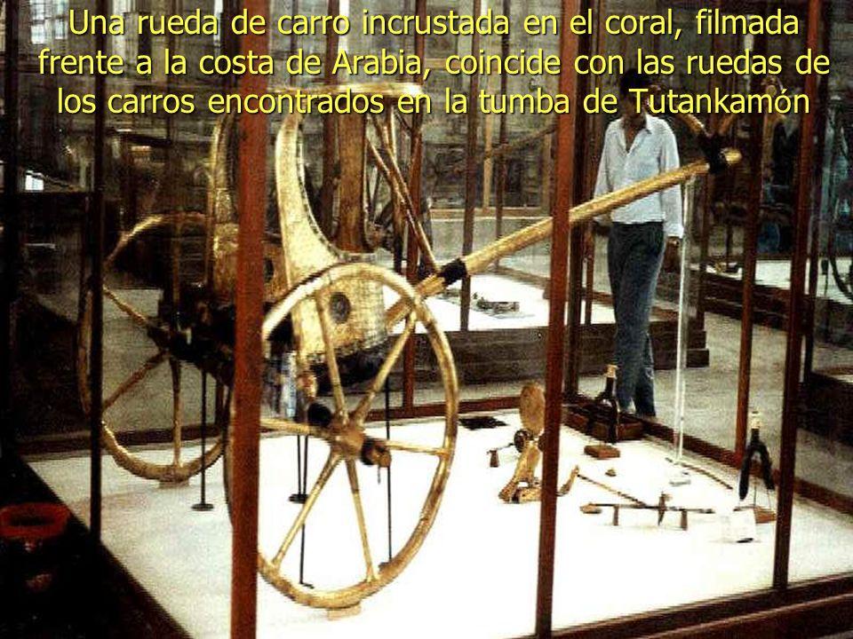 Una rueda de carro incrustada en el coral, filmada frente a la costa de Arabia, coincide con las ruedas de los carros encontrados en la tumba de Tutankamón