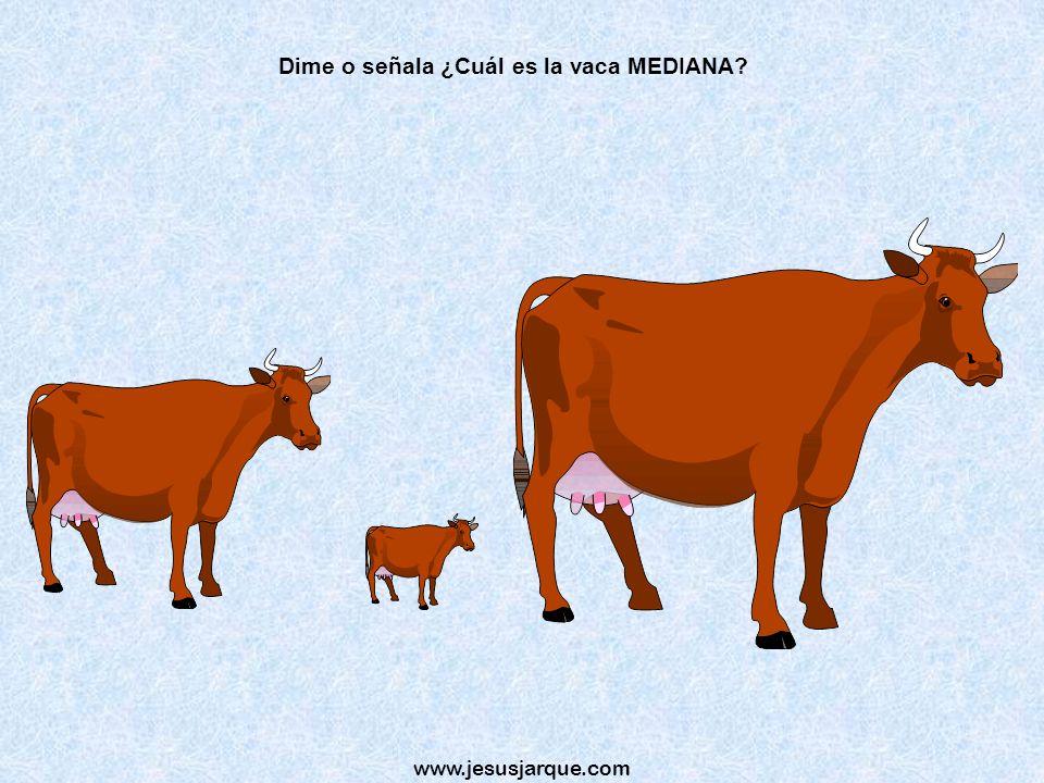 Dime o señala ¿Cuál es la vaca MEDIANA