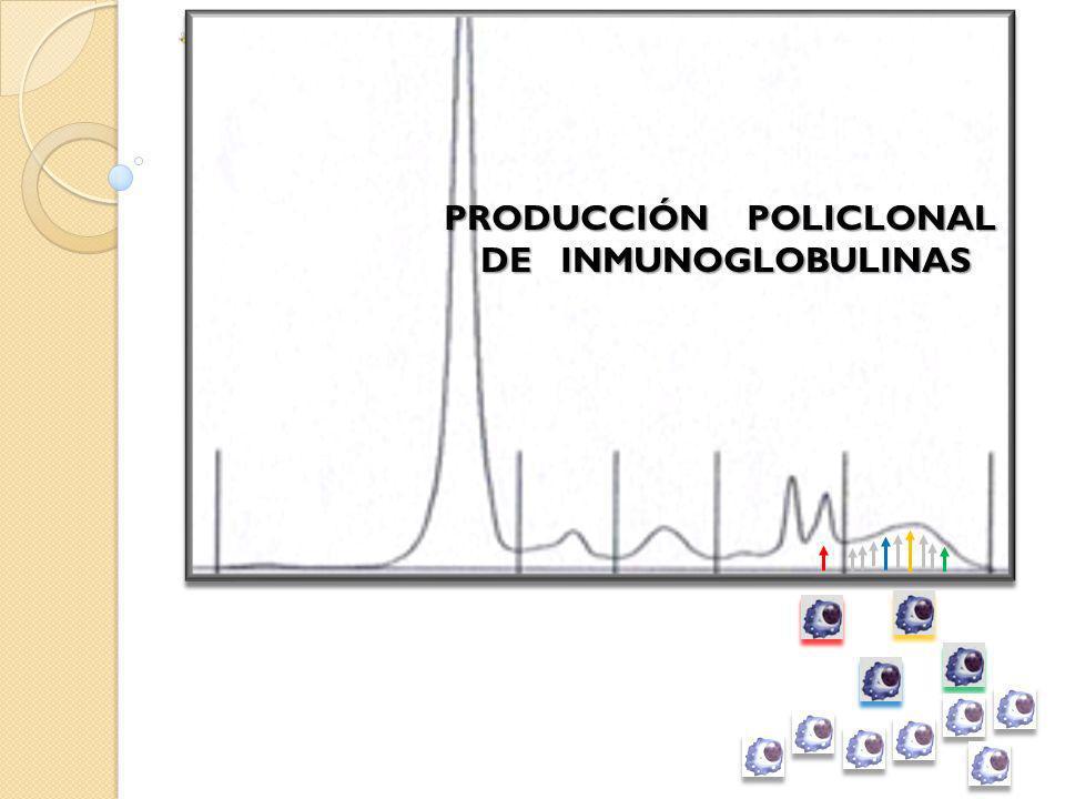 PRODUCCIÓN POLICLONAL DE INMUNOGLOBULINAS
