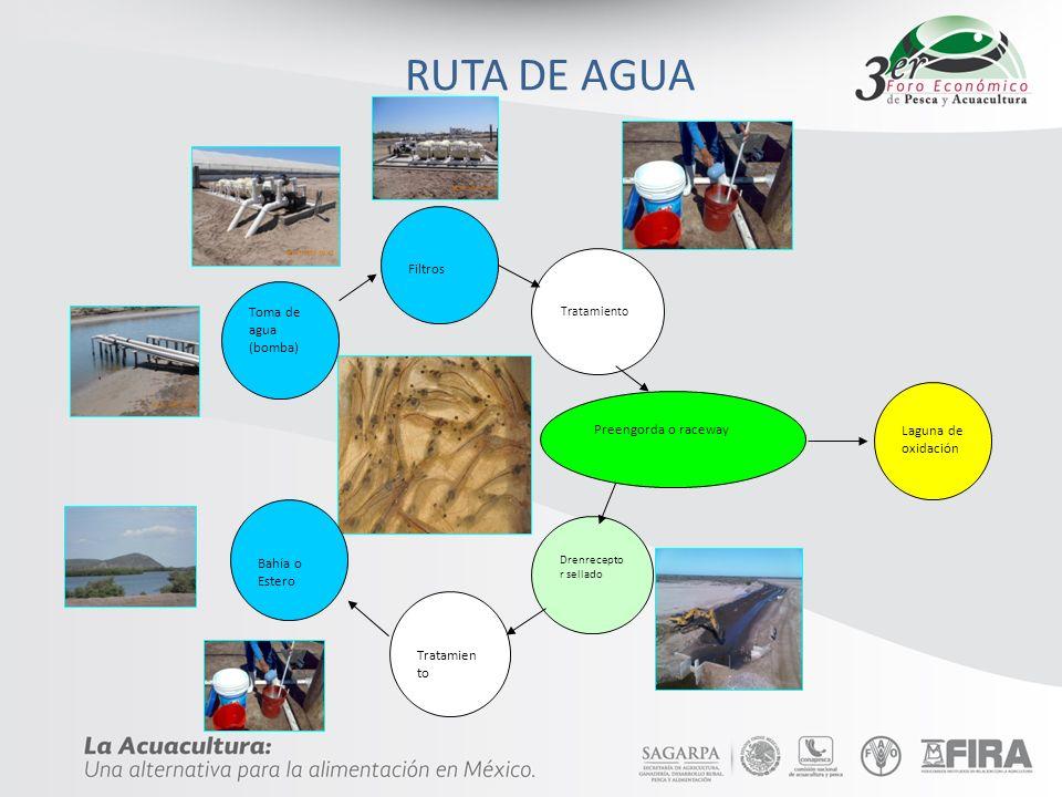 RUTA DE AGUA Filtros Preengorda o raceway Toma de agua (bomba)