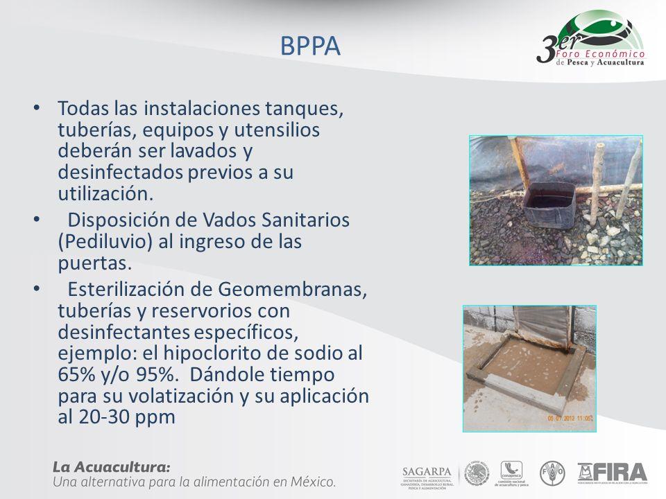 BPPATodas las instalaciones tanques, tuberías, equipos y utensilios deberán ser lavados y desinfectados previos a su utilización.