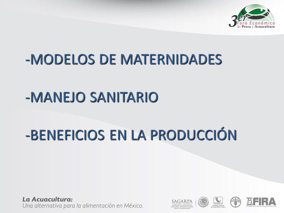 -MODELOS DE MATERNIDADES