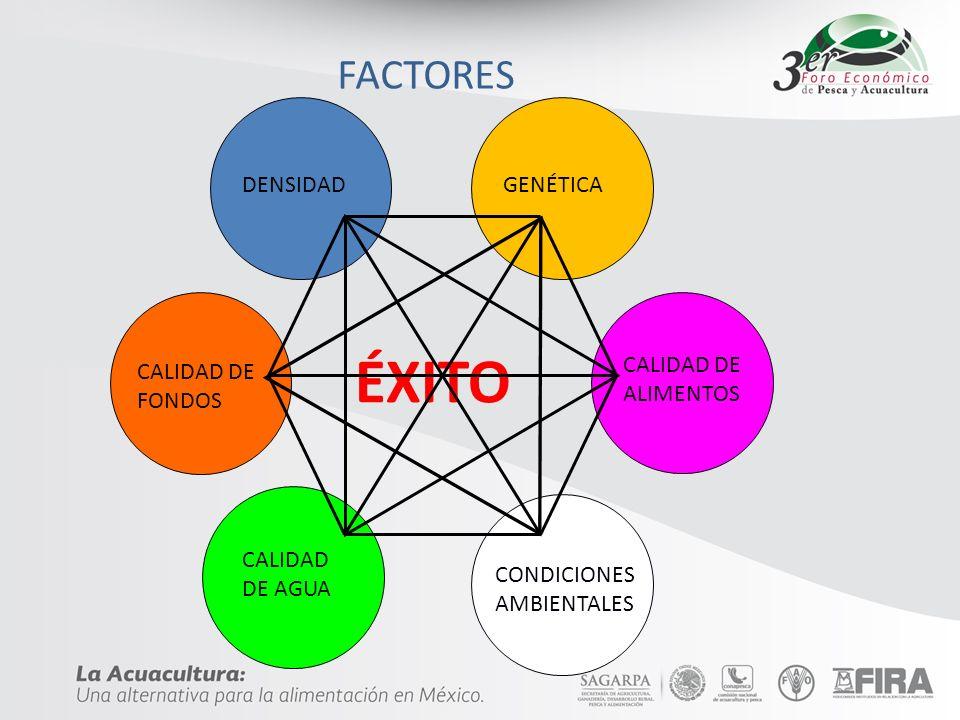 ÉXITO FACTORES DENSIDAD GENÉTICA CALIDAD DE ALIMENTOS