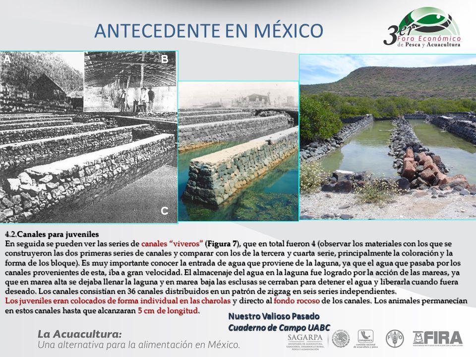 ANTECEDENTE EN MÉXICO Nuestro Valioso Pasado Cuaderno de Campo UABC