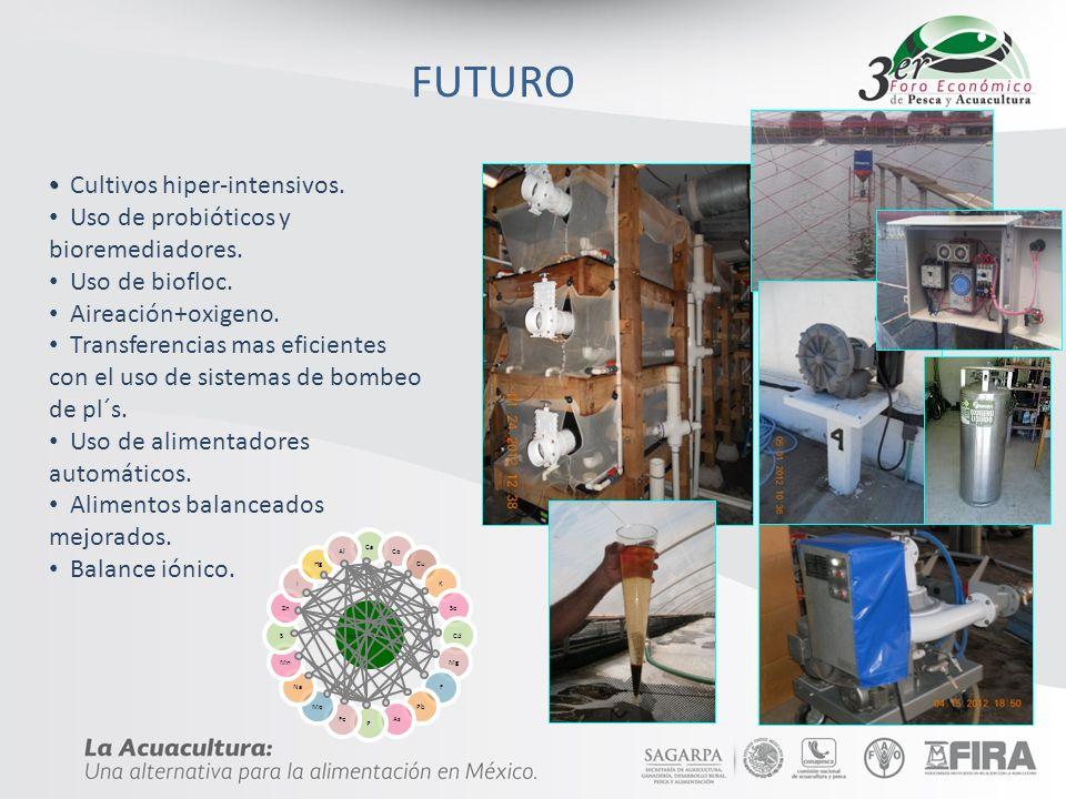 FUTURO Cultivos hiper-intensivos.