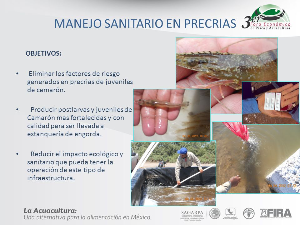 MANEJO SANITARIO EN PRECRIAS