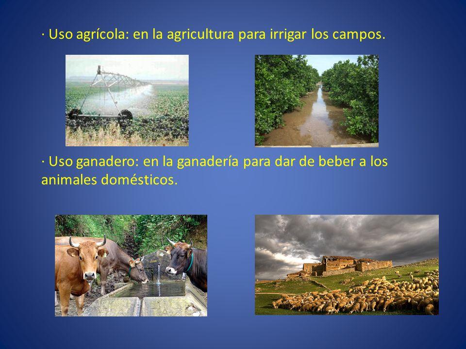 · Uso agrícola: en la agricultura para irrigar los campos.