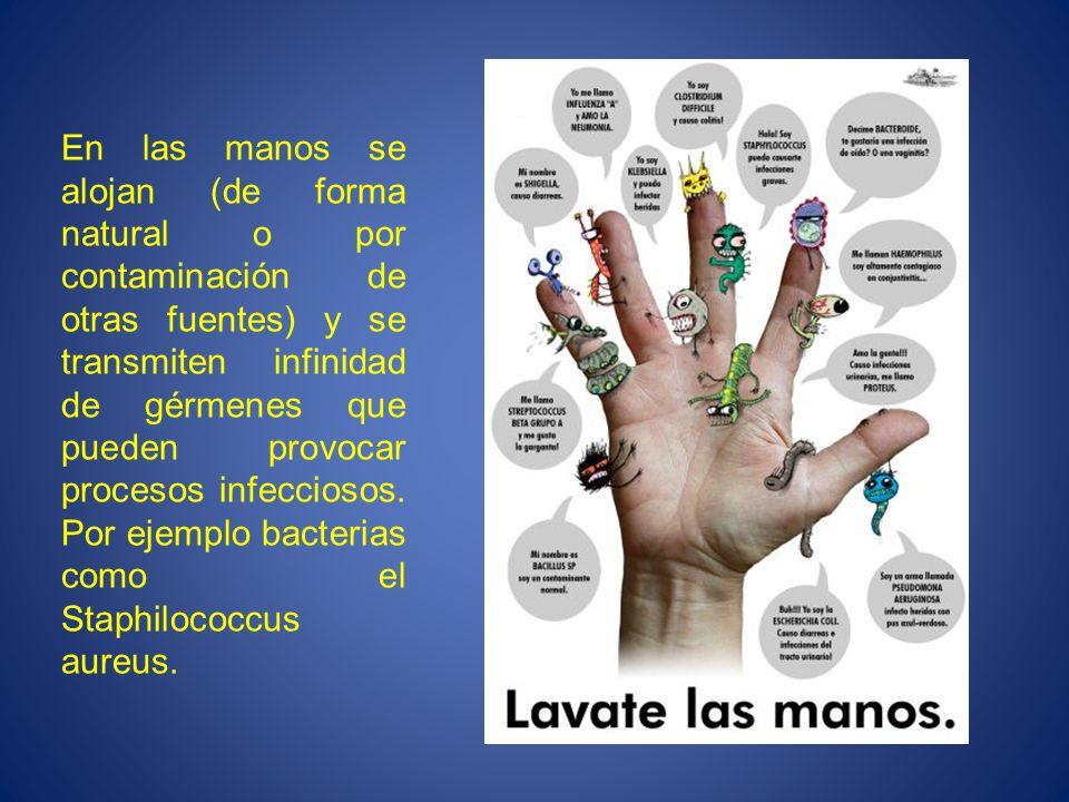 En las manos se alojan (de forma natural o por contaminación de otras fuentes) y se transmiten infinidad de gérmenes que pueden provocar procesos infecciosos.