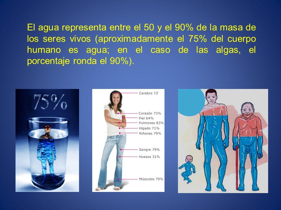 El agua representa entre el 50 y el 90% de la masa de los seres vivos (aproximadamente el 75% del cuerpo humano es agua; en el caso de las algas, el porcentaje ronda el 90%).