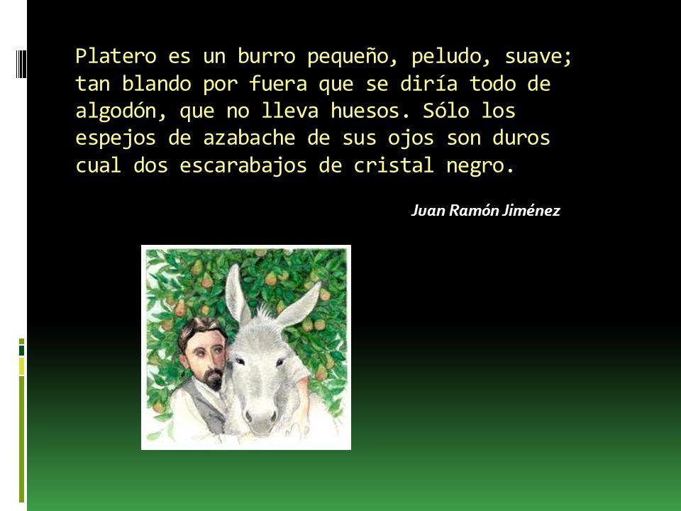 Platero es un burro pequeño, peludo, suave; tan blando por fuera que se diría todo de algodón, que no lleva huesos. Sólo los espejos de azabache de sus ojos son duros cual dos escarabajos de cristal negro.