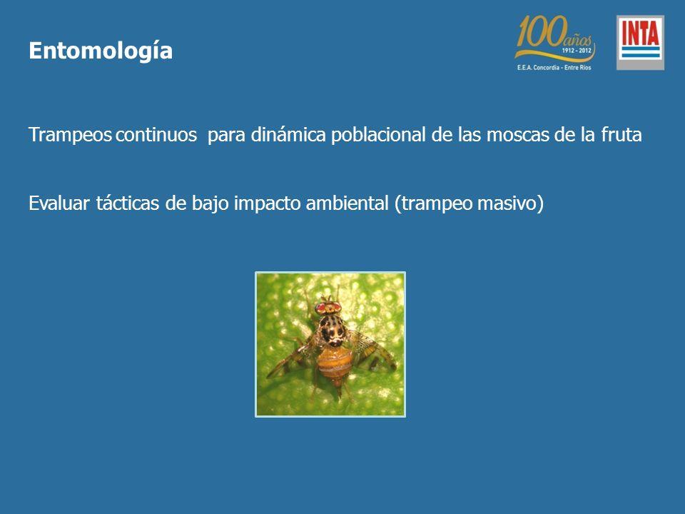 Entomología Trampeos continuos para dinámica poblacional de las moscas de la fruta. Evaluar tácticas de bajo impacto ambiental (trampeo masivo)