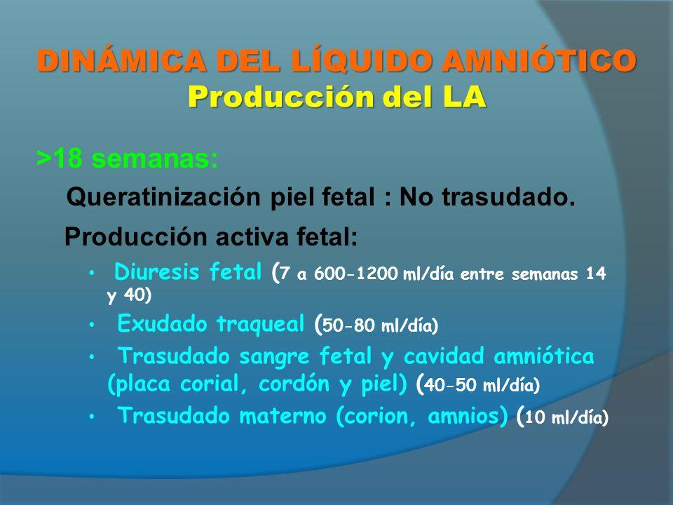DINÁMICA DEL LÍQUIDO AMNIÓTICO Producción del LA