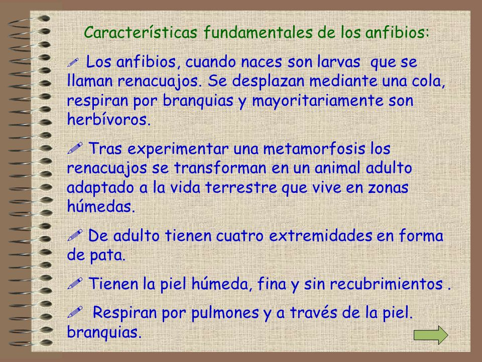 Características fundamentales de los anfibios: