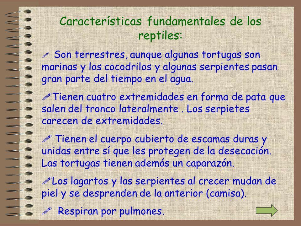 Características fundamentales de los reptiles: