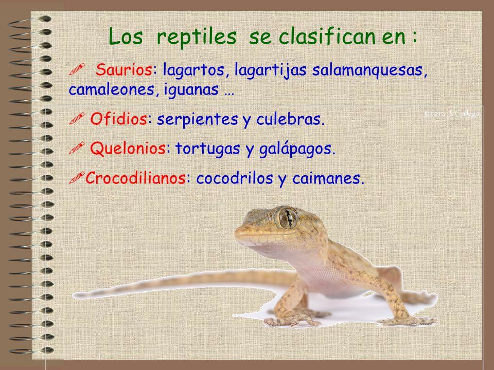Los reptiles se clasifican en :