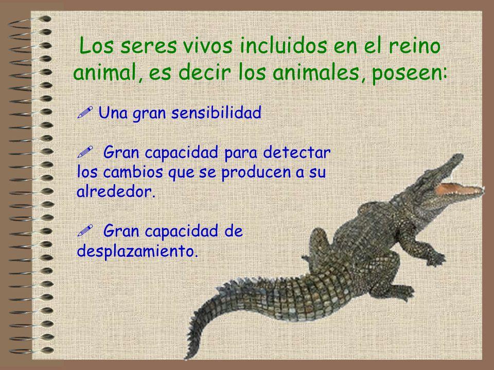 Los seres vivos incluidos en el reino animal, es decir los animales, poseen: