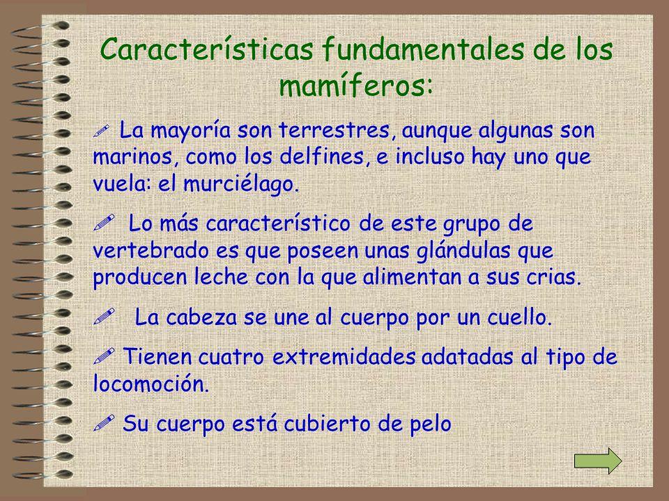 Características fundamentales de los mamíferos: