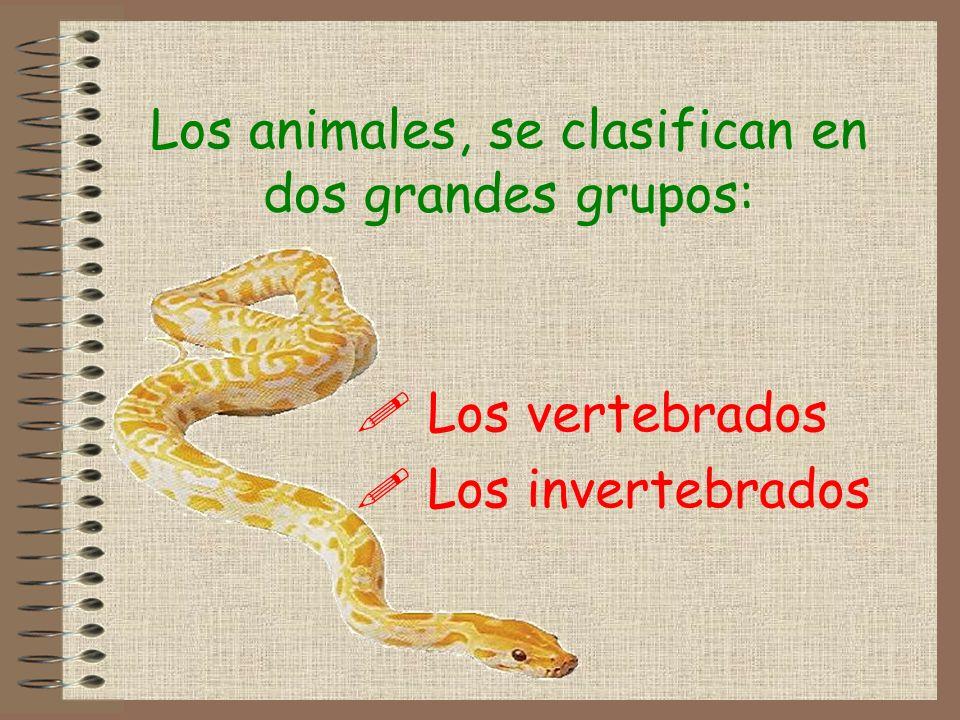 Los animales, se clasifican en dos grandes grupos: