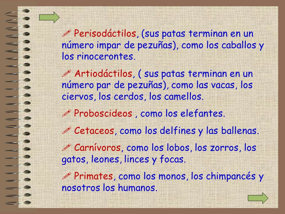 Perisodáctilos, (sus patas terminan en un número impar de pezuñas), como los caballos y los rinocerontes.