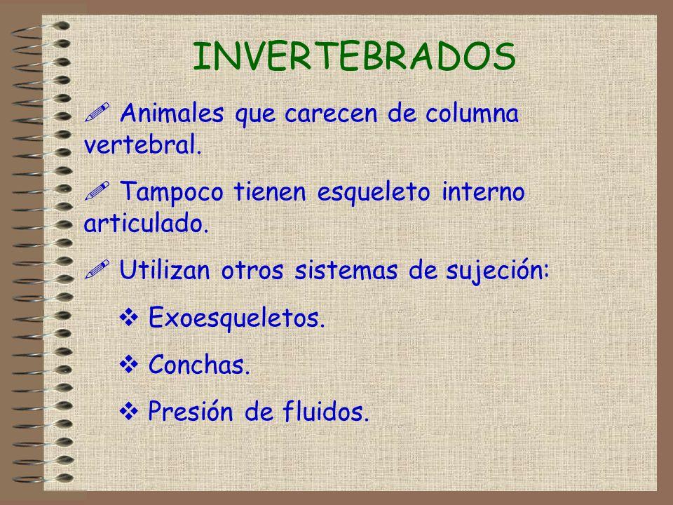 INVERTEBRADOS Animales que carecen de columna vertebral.