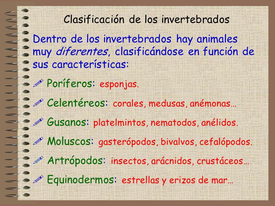 Clasificación de los invertebrados