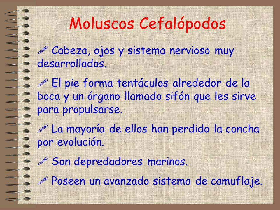 Moluscos CefalópodosCabeza, ojos y sistema nervioso muy desarrollados.