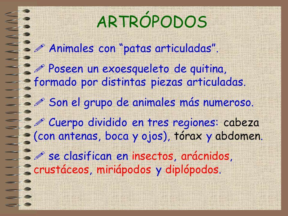 ARTRÓPODOS Animales con patas articuladas .