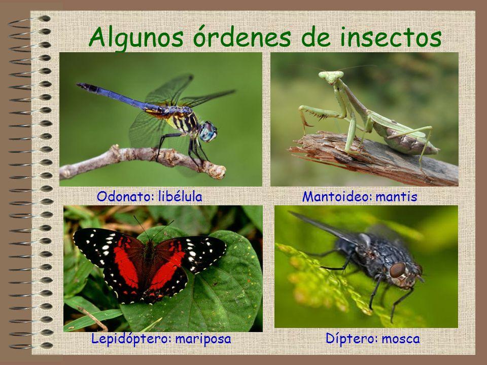 Algunos órdenes de insectos