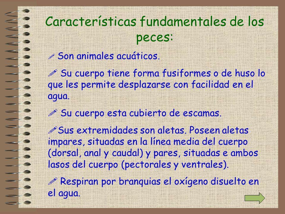 Características fundamentales de los peces: