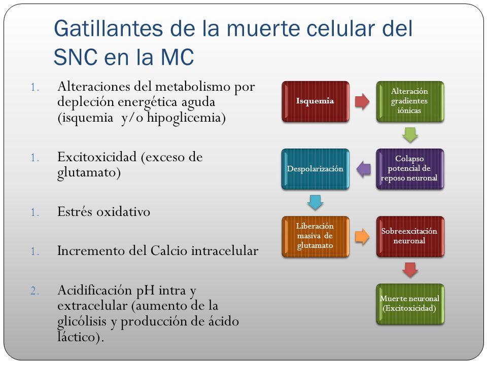 Gatillantes de la muerte celular del SNC en la MC