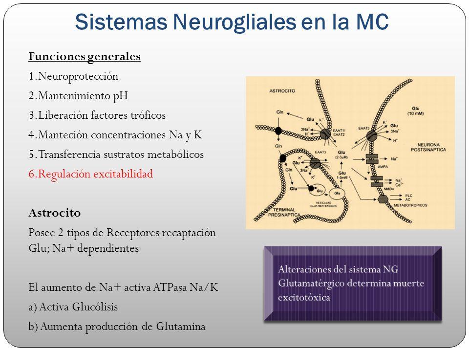 Sistemas Neurogliales en la MC