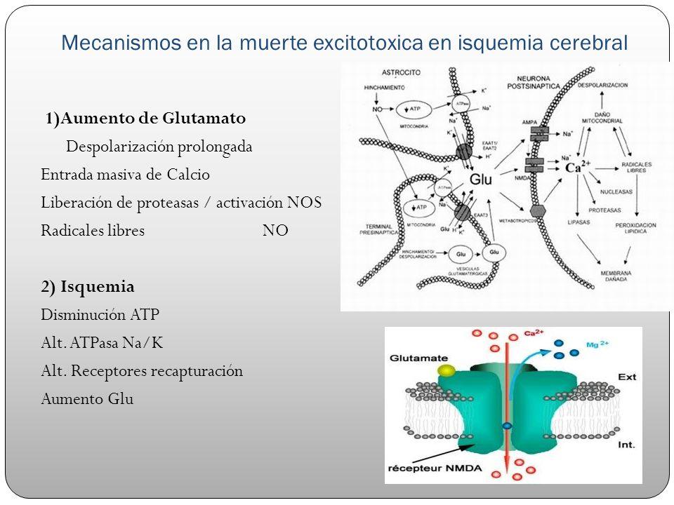 Mecanismos en la muerte excitotoxica en isquemia cerebral