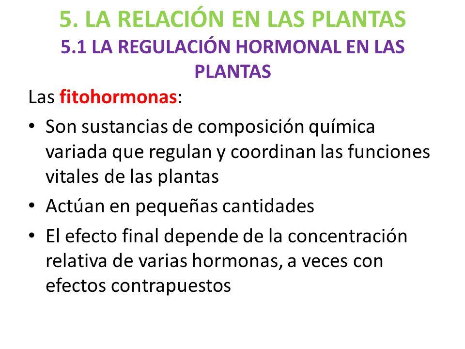 La reproducci n y la relaci n de las plantas ppt descargar for Hormonas en las plantas