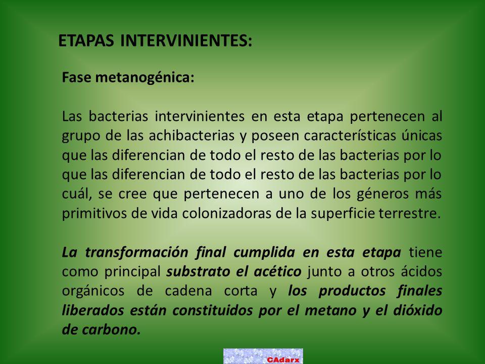 ETAPAS INTERVINIENTES: