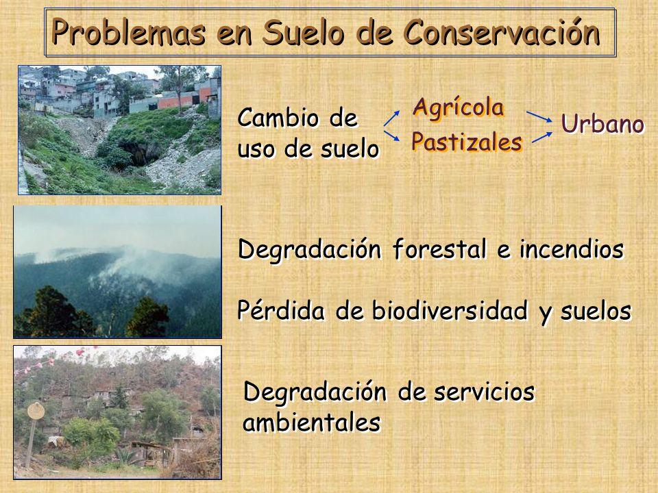 Problemas en Suelo de Conservación