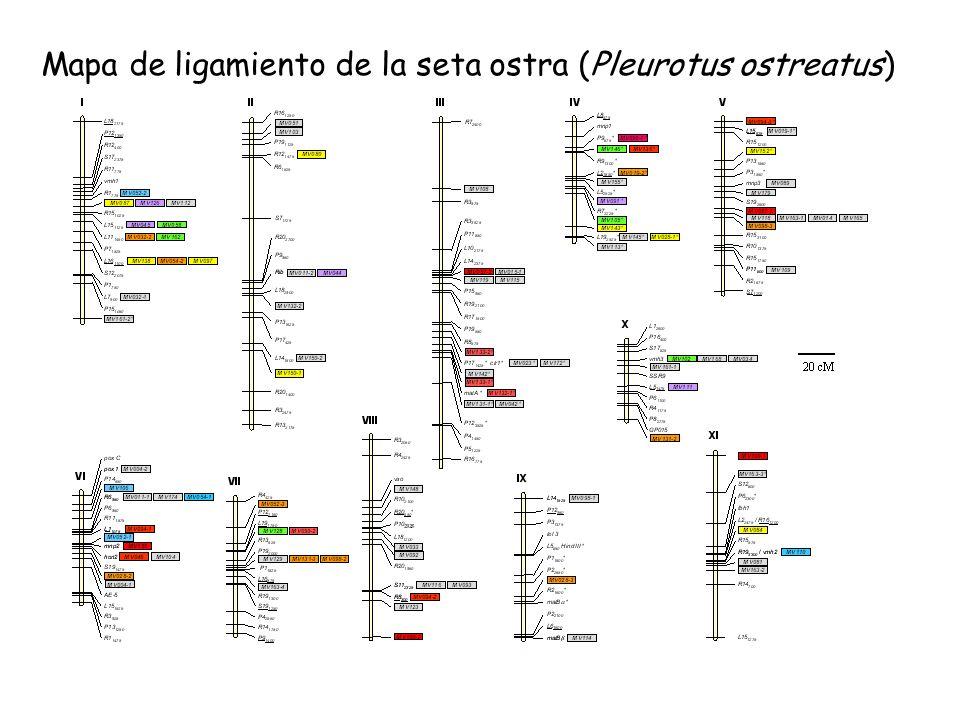 Mapa de ligamiento de la seta ostra (Pleurotus ostreatus)
