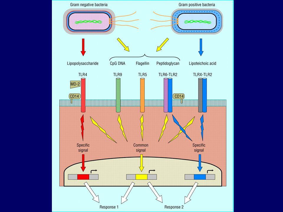 (TLR) Expresados en las células inmunes.
