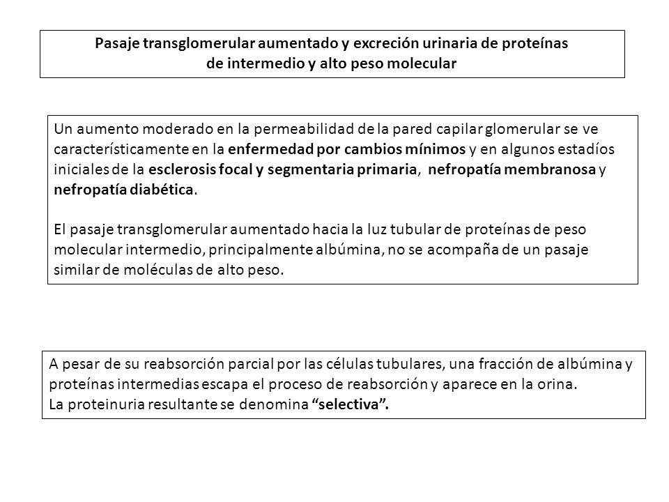 Pasaje transglomerular aumentado y excreción urinaria de proteínas