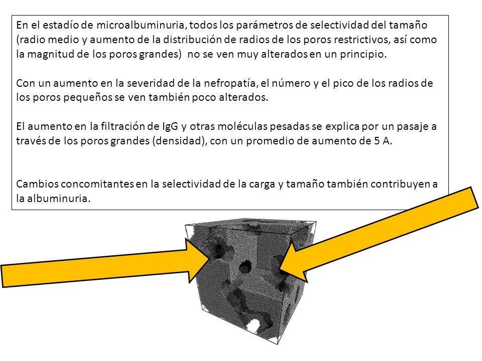 En el estadío de microalbuminuria, todos los parámetros de selectividad del tamaño (radio medio y aumento de la distribución de radios de los poros restrictivos, así como la magnitud de los poros grandes) no se ven muy alterados en un principio.