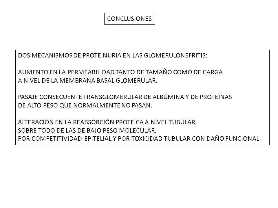 CONCLUSIONES DOS MECANISMOS DE PROTEINURIA EN LAS GLOMERULONEFRITIS: AUMENTO EN LA PERMEABILIDAD TANTO DE TAMAÑO COMO DE CARGA.