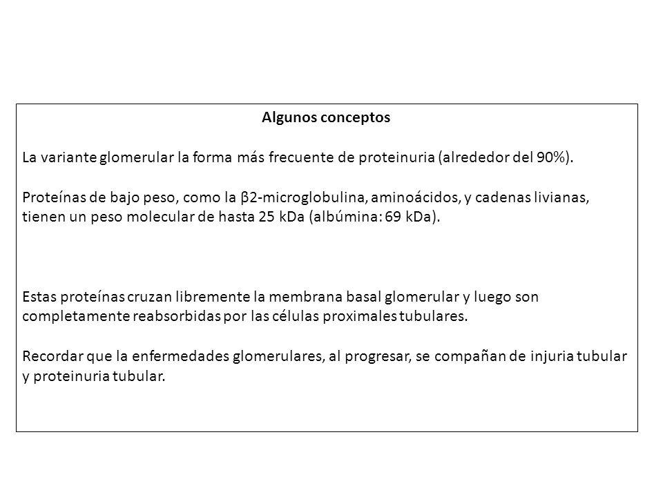 Algunos conceptos La variante glomerular la forma más frecuente de proteinuria (alrededor del 90%).