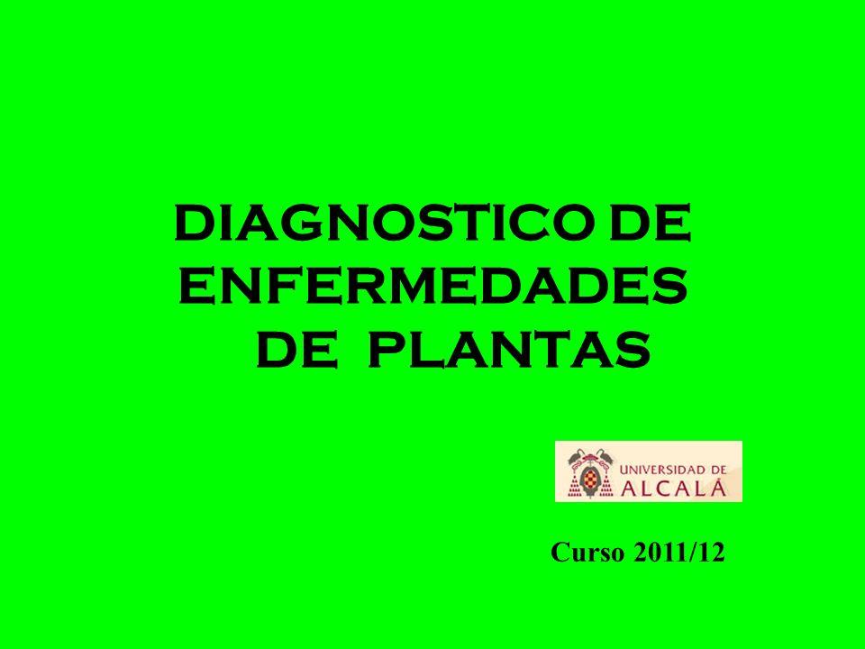 DIAGNOSTICO DE ENFERMEDADES DE PLANTAS