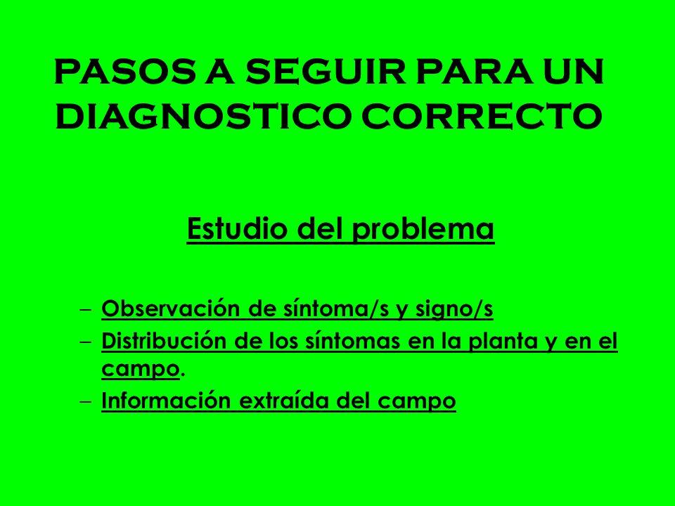 PASOS A SEGUIR PARA UN DIAGNOSTICO CORRECTO