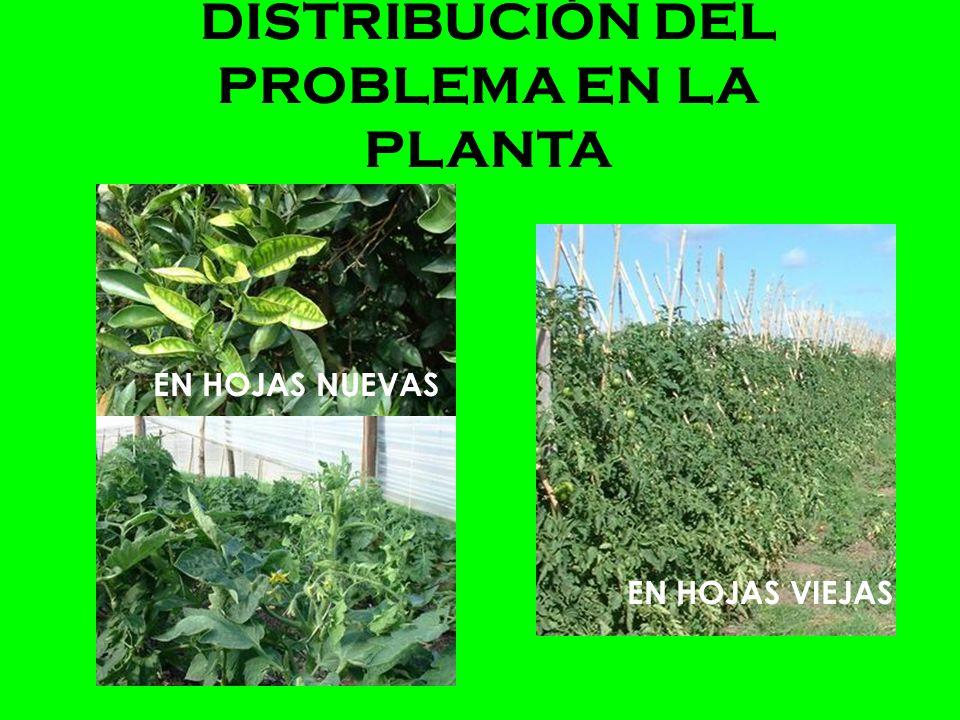 DISTRIBUCIÓN DEL PROBLEMA EN LA PLANTA