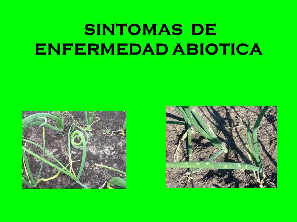 SINTOMAS DE ENFERMEDAD ABIOTICA