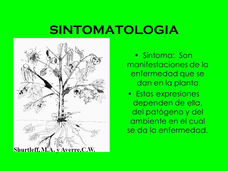 Síntoma: Son manifestaciones de la enfermedad que se dan en la planta