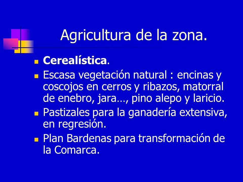 Agricultura de la zona. Cerealística.