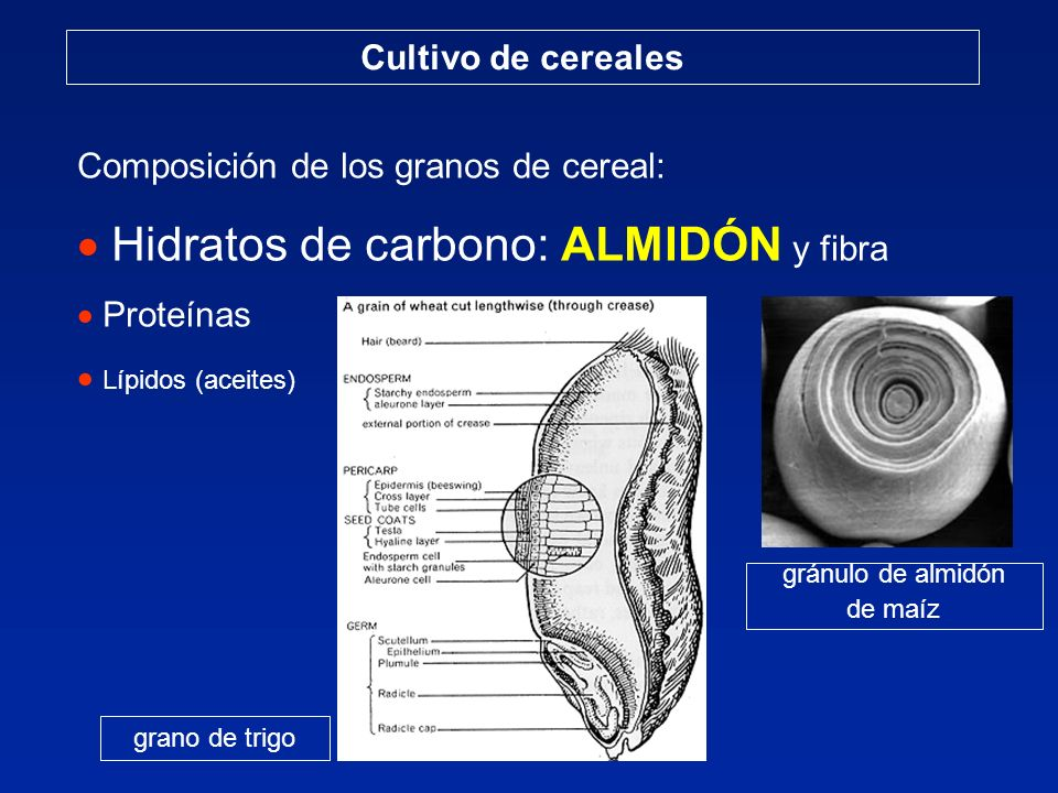 Hidratos de carbono: ALMIDÓN y fibra