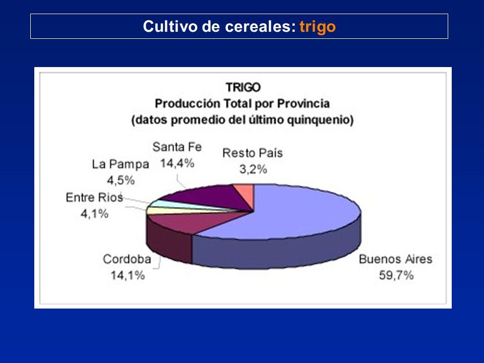 Cultivo de cereales: trigo